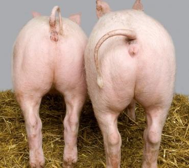 Diffuso il sesso tra uomini e animali in Danimarca