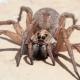 Vive 3 giorni con un ragno sotto pelle
