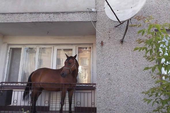 Tiene il cavallo sul balcone per evitare che glielo rubino