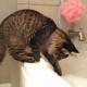 Il bagnetto al gatto. È davvero necessario?