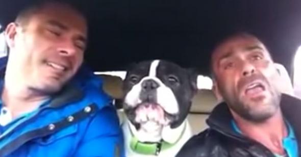 La reazione del cane quando il padrone inizia a cantare è semplicemente FENOMENALE